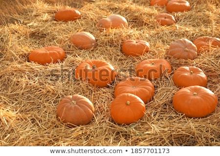 Productos temporada de otoño heno calabaza pepinos vector Foto stock © robuart