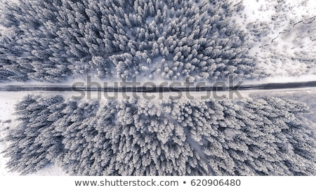 Aerial view of winter forest. Stock photo © olira