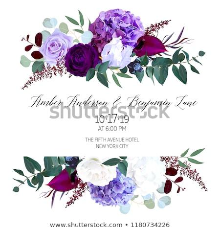 Profundo púrpura iris aislado blanco primavera Foto stock © sahua