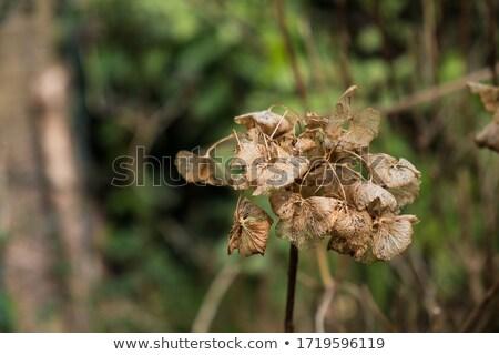 bladeren · gras · najaar · foto · veel · brand - stockfoto © pavelmidi