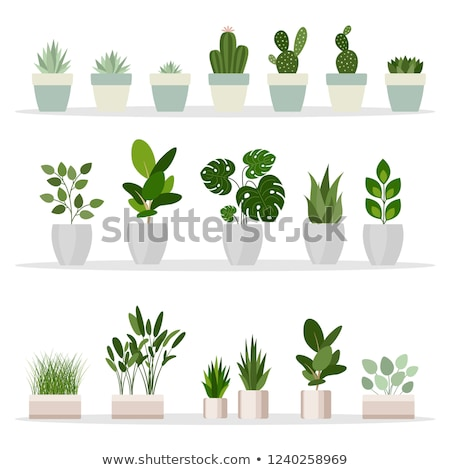 potted flower isolated on white vector banner stock photo © robuart