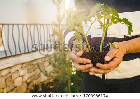 Starszy człowiek domu dorosły Zdjęcia stock © HighwayStarz
