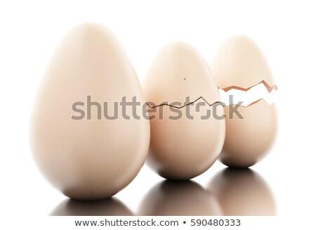 Kırık yumurta civciv içinde beyaz yalıtılmış Stok fotoğraf © evgeny89