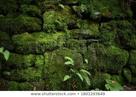 Piękna ściany mur skał Zdjęcia stock © jaykayl