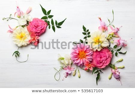 Flower Composition Stock photo © nyul