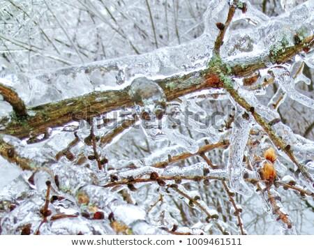 icicle 04 Stock photo © LianeM