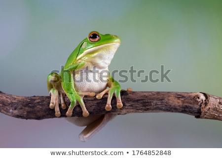ストックフォト: 緑 · カエル · 湖 · 海岸 · 春 · 自然