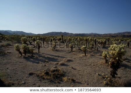 Bos zonlicht landschap groene zand kleur Stockfoto © emattil