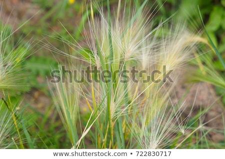 vad · gaz · virágok · ír · vidék · virág - stock fotó © stevanovicigor