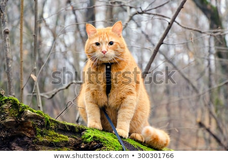 красный кошки привязь сидят дерево лес Сток-фото © AlisLuch