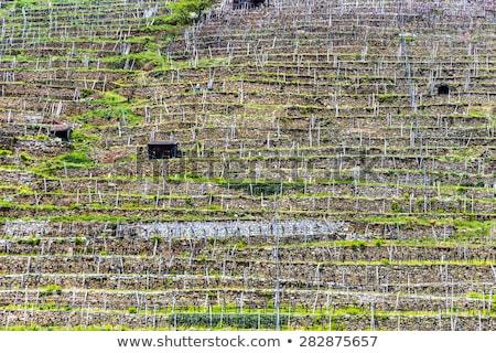 Korai tavasz ház bor természet zöld Stock fotó © meinzahn