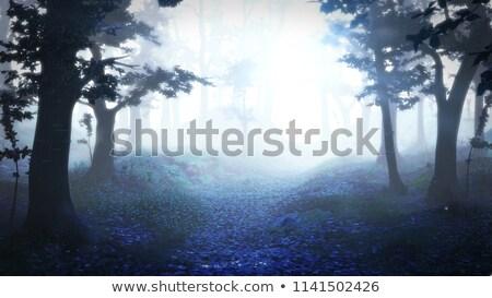 туманный · тропе · лес · ведущий · лесу - Сток-фото © lana_m