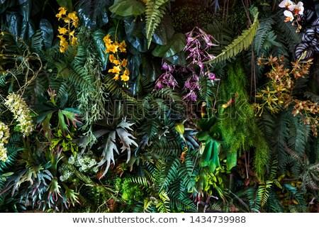 разнообразие деревья парка саду Сток-фото © Digifoodstock