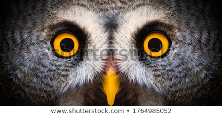 Nocturnal creature Stock photo © bluering