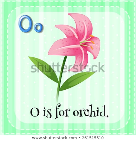 Flashcard letter O is for orchid Stock photo © bluering