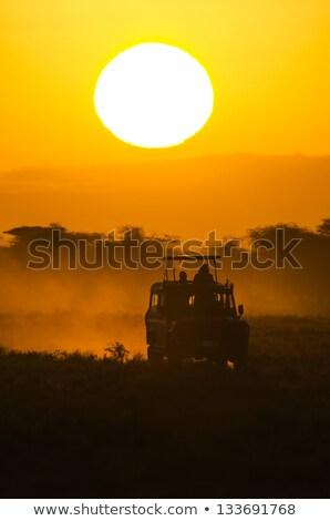 Dzsip szafari naplemente illusztráció autó tájkép Stock fotó © adrenalina