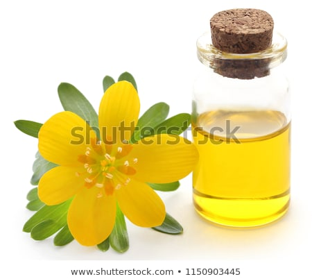Eranthis hyemalis and medicinal extract Stock photo © bdspn