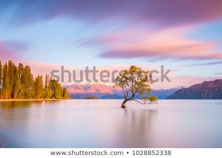 meztelen · fa · naplemente · kirakat · dagadt · folyó - stock fotó © cozyta