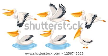 Set of pelican character Stock photo © bluering