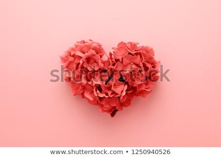 san · valentino · fiore · rosa · petalo · a · forma · di · cuore · carta · felice - foto d'archivio © cienpies