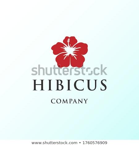 логотип шаблон гибискуса дизайна моде Сток-фото © blumer1979