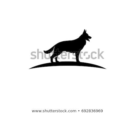 пастух · собака · атаковать · подготовки · иллюстрация - Сток-фото © frank11