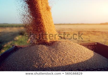 wheat harvest horizon stock photo © lightsource