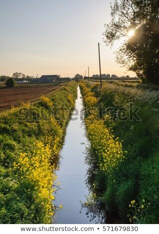 топлива · фермы · промышленных · цвета · Трубы · бензина - Сток-фото © meinzahn