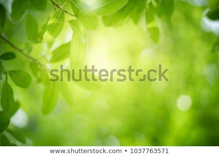 green fresh leaves in sunlight in the forest stock photo © meinzahn