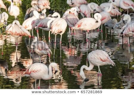 Аргентина дерево пейзаж птица озеро парка Сток-фото © xura
