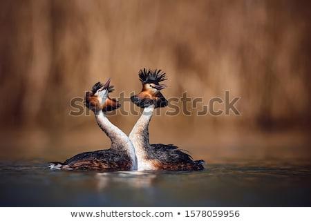 Pássaro pena ver mergulho fotografia Foto stock © chris2766