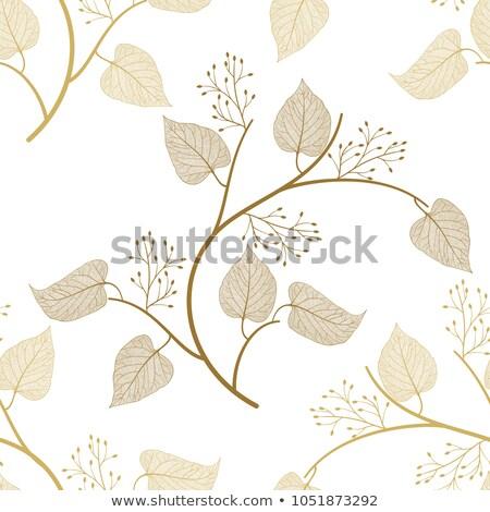 Model huş ağacı yaprakları bahçe sonbahar ağaç Stok fotoğraf © meinzahn