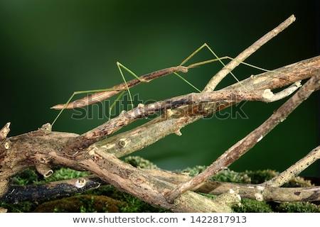 Sopa böcek örnek yaprak bilim plaka Stok fotoğraf © bluering