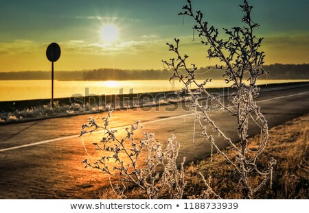 autumn dawn frosty road fog over the lake and grass covered with frost stock photo © alisluch