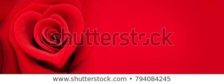 バナー 赤いバラ 3  水平な バナー 装飾された ストックフォト © blackmoon979