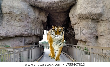 Sauvage tigre grotte illustration herbe nature Photo stock © bluering