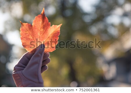 Woman holding leaf up to sky Stock photo © IS2
