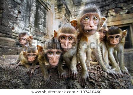 Gruppe Affe Dschungel Illustration Natur Hintergrund Stock foto © colematt