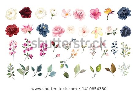 vektor · szett · virág · vektor · virág · természet · művészet - stock fotó © olllikeballoon