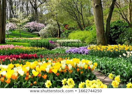 Beautiful spring garden Stock photo © artush