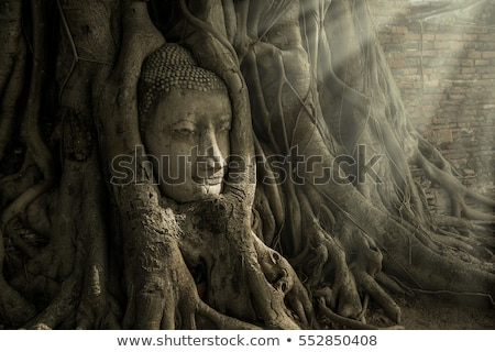 Tête buddha statue arbre racines temple Photo stock © bloodua