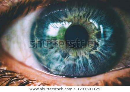 Részlet szem szép rajz izolált fehér Stock fotó © X-etra