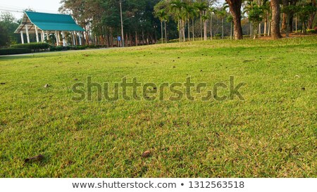 Small pavilion among nature with forest background  Stock photo © cozyta