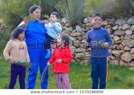 Peruvian Herb Called Muna Stock photo © ildi