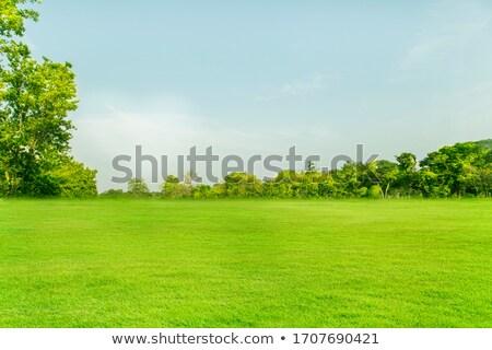 Groen gras frame gras symbool groene landscaping Stockfoto © Lightsource