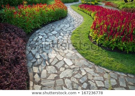 Jardín caminata manera flor casa verde Foto stock © FrameAngel