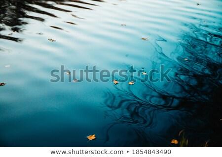Reflectie bomen water najaar bos zonsondergang Stockfoto © Peredniankina