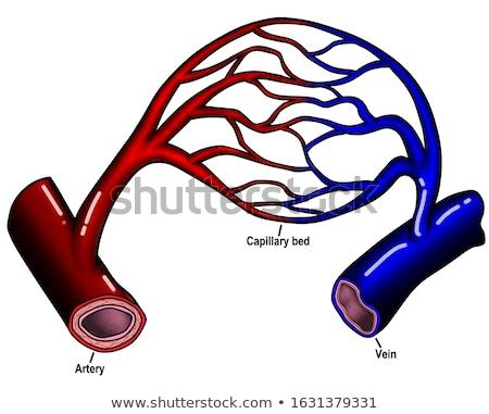 sangue · compensar · um · célula · camada - foto stock © 7activestudio