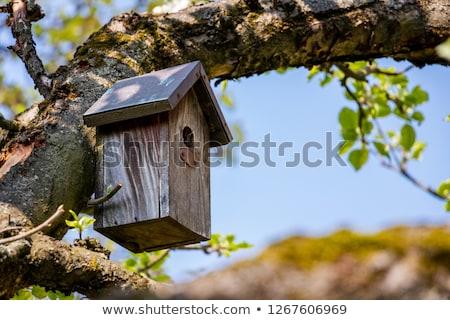 birdhouse in summer Stock photo © adrenalina