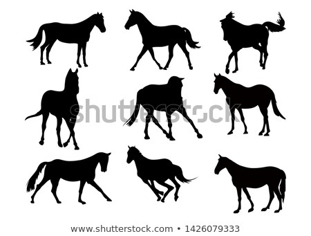 Stock photo: horse silhouette in fast trot pose